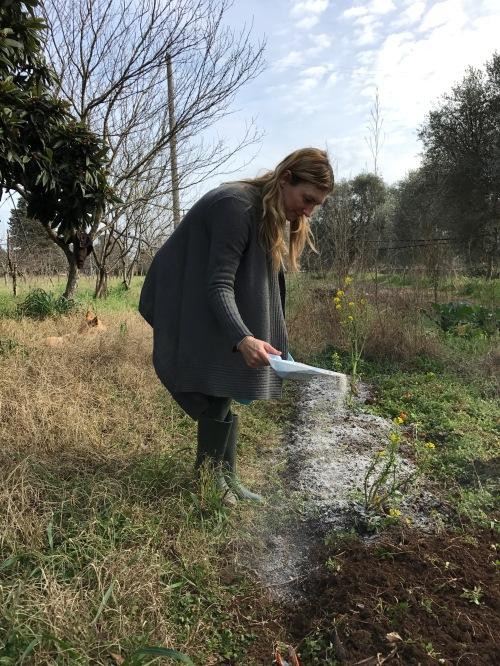 semina cenere biologico orto vegan