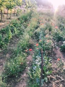 coltivare, orto, autonomia, natura, famiglia, bambini, educare, crescere, sostenibile, vivere in natura, autoproduzione, seminare, raccogliere, frutti, piante, cibo, biologico, genitori, consapevolezza, casa, vita in campagna